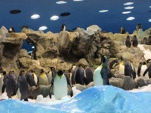 Ein Erlebnis: Die Pinguine im Loro Parque (Bild www.blog-kreuzfahrt.ch)