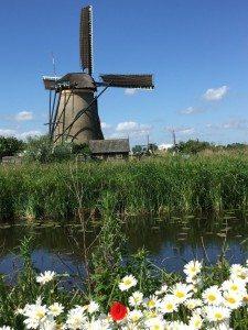 18 Windmühlen sind in Kinderdijk zu besichtigen - 17 davon sind bewohnt (Bild Stieger)