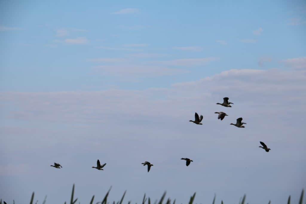300 Vogelarten leben im Donau Delta