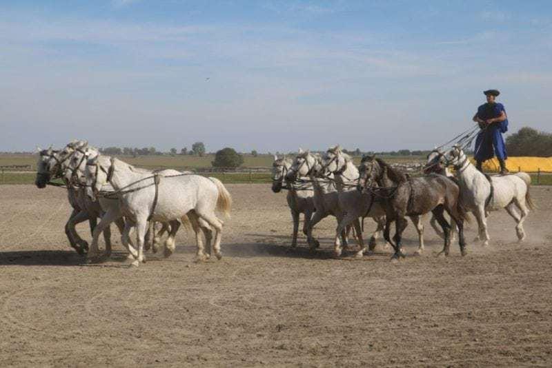 Pferde-Akrobatik in der Ungarischen Puszta (Bild Stieger)