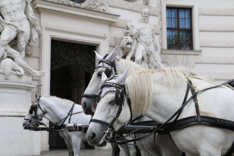 Pferdegespann vor der Wiener Hofburg