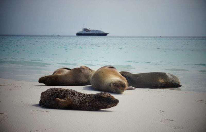 Einmalige Natur- und Tierparadiese mit Silversea entdecken (Bild Anke Schaffelhuber)